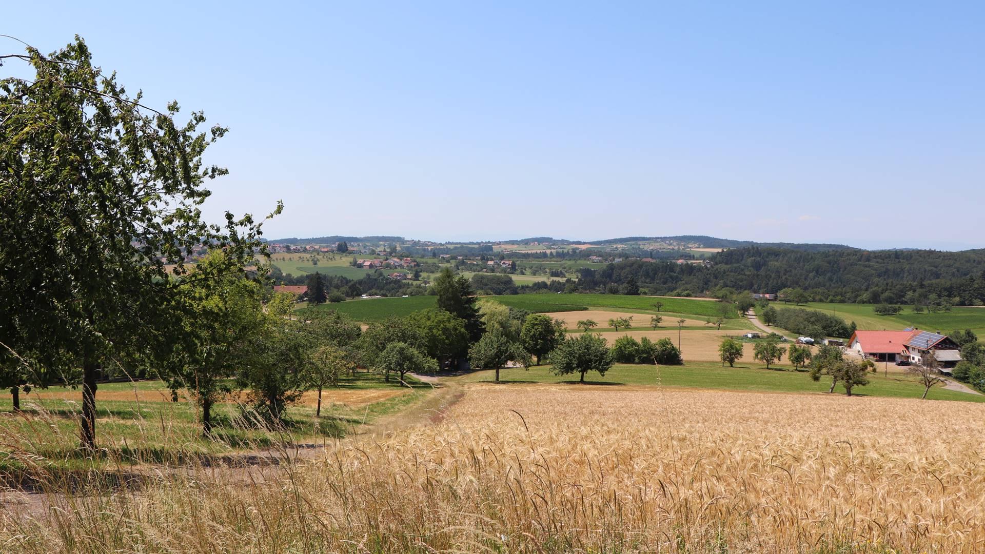 schwarzwaldbauernhof-freiamt