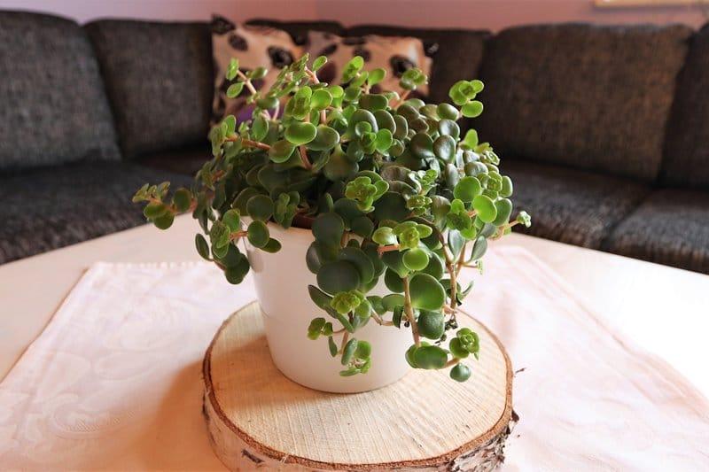 Blumendeko auf dem Couchtisch